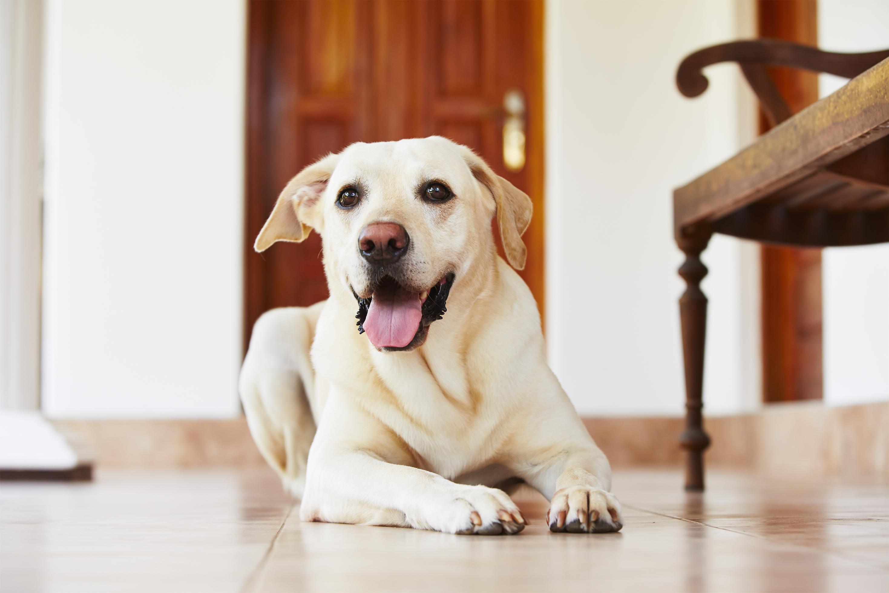 Anti Aging Dog Image 1