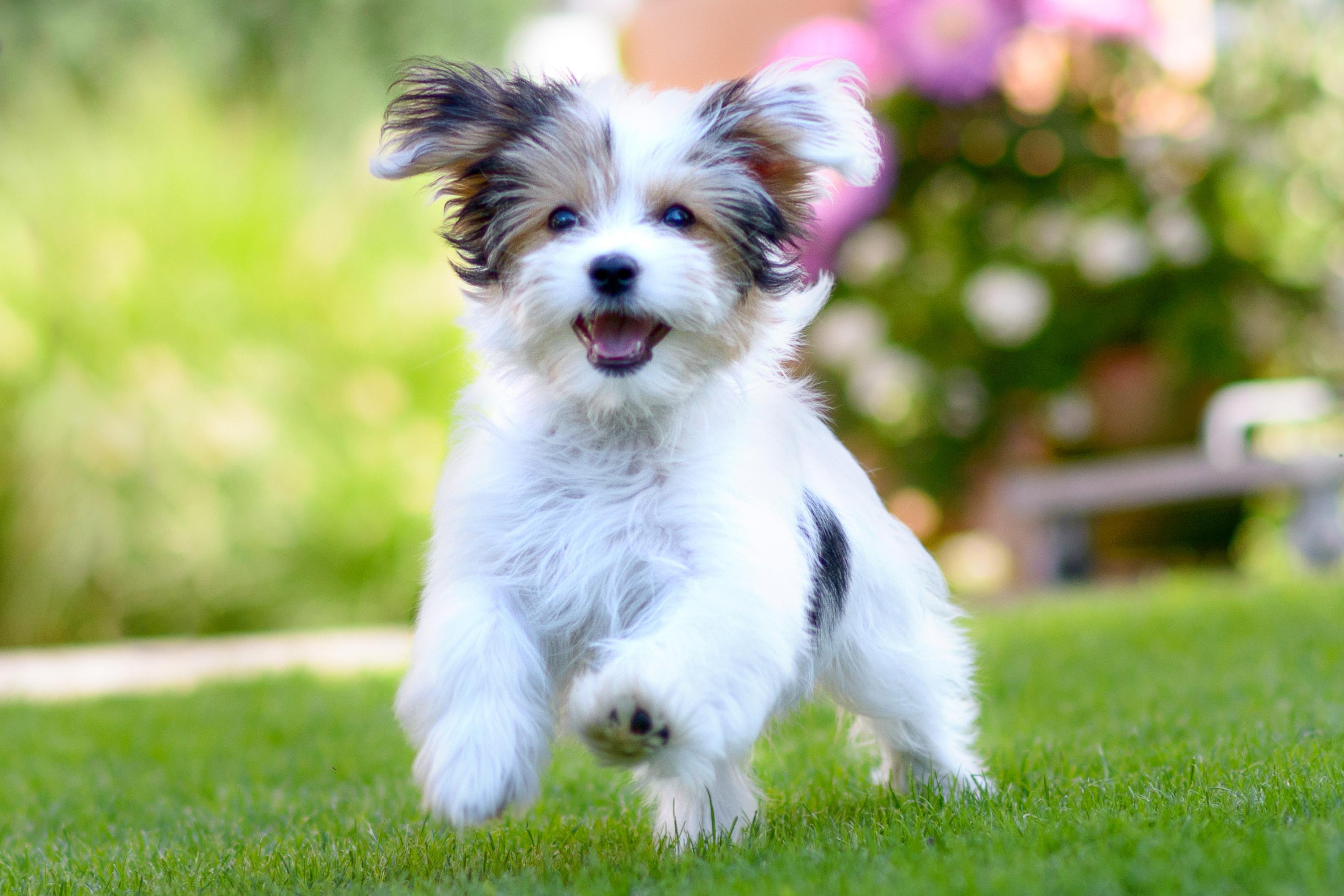 Anti Aging Dog Image 3