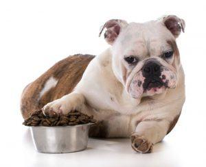 dog guarding food