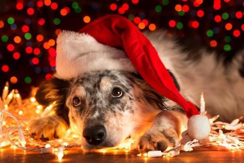 dogs and christmas lights