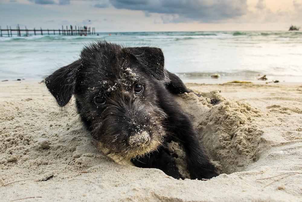 digging dog problem