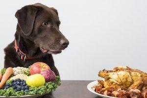 Raw Food Diet Dogs Peanut Butter