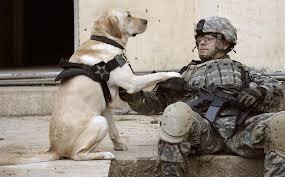 military, dog news, service dog