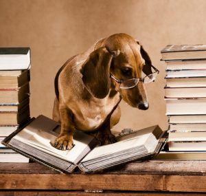 Dog Book Bucket List For Book Lovers Trudog