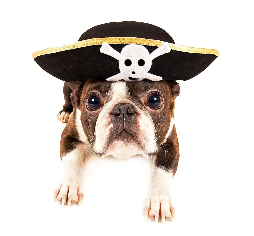 Why Does My Dog Bury Bones?