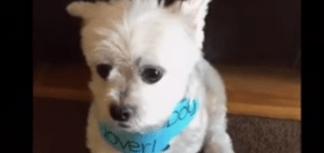 dog testimonial featured image