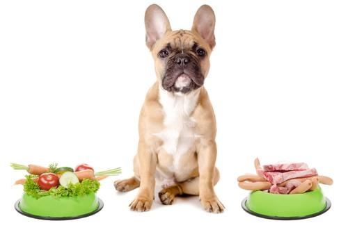 dog food raw
