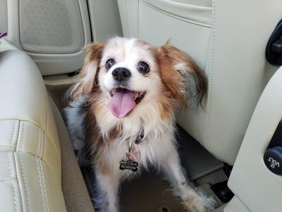 Help a rescue Dog