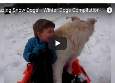 [VIDEO] Snowy Dog Antics: Silly Dog Sunday