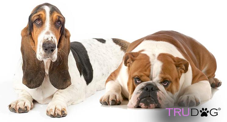 dog breeds, changing dog breeds