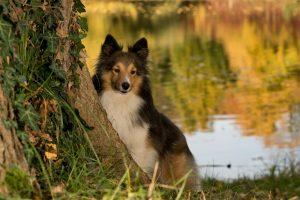 dogs, longevity boost, health