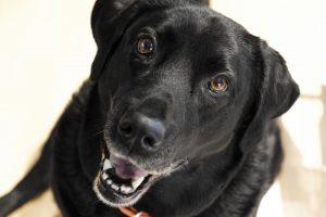 grain free, dog food, facts, myths