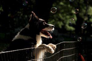 dog care, dog health