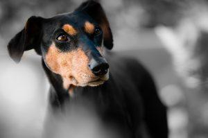 protection, afraid, dog fear, signs, socialization,
