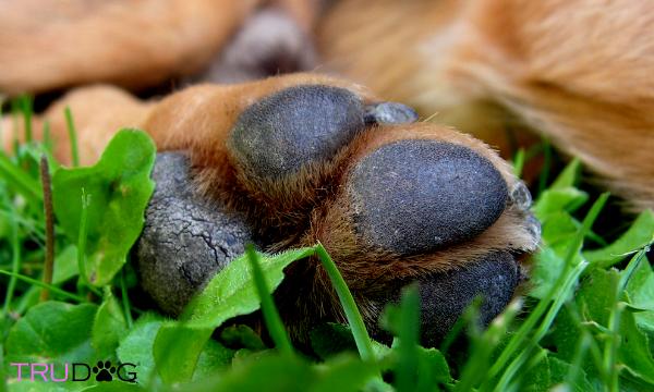dog arthritis, joint, health, healthy,