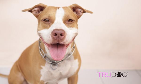 Pitbulls, facts about pitbulls