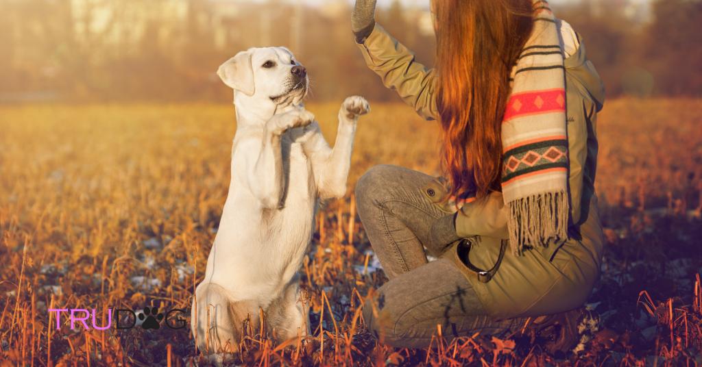 Training dogs, dog training