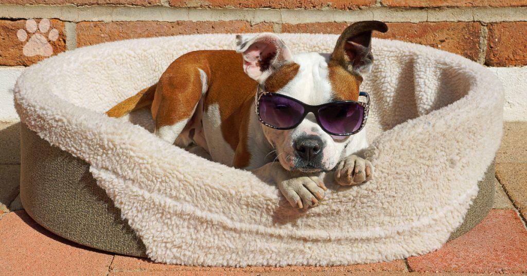Tire beds, dog beds, DIY