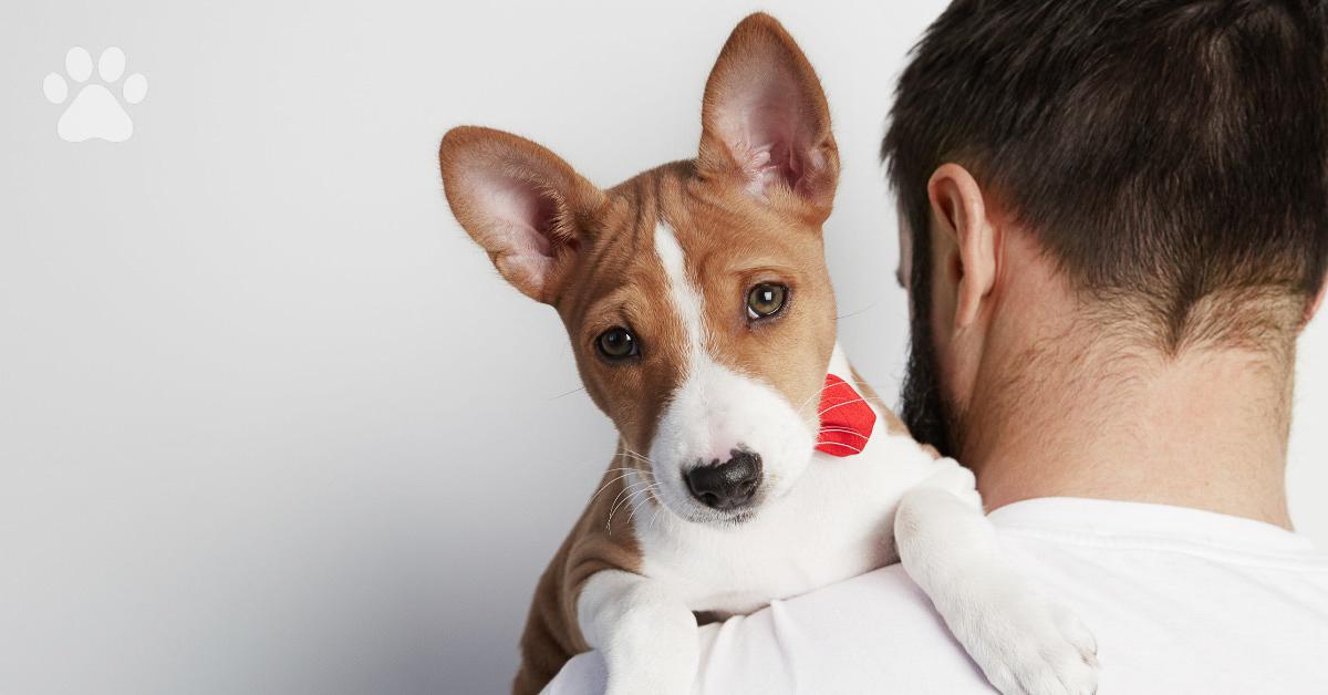 Caring For Basenji Puppies Trudog