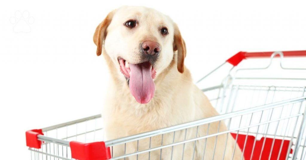 shopping dog, happy pup