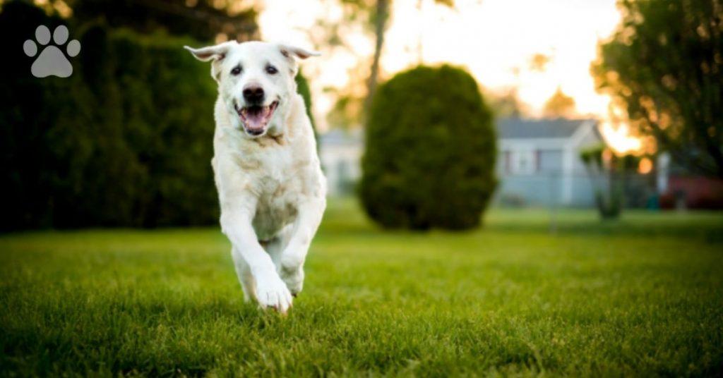 service dog Sully, President Bush service dog