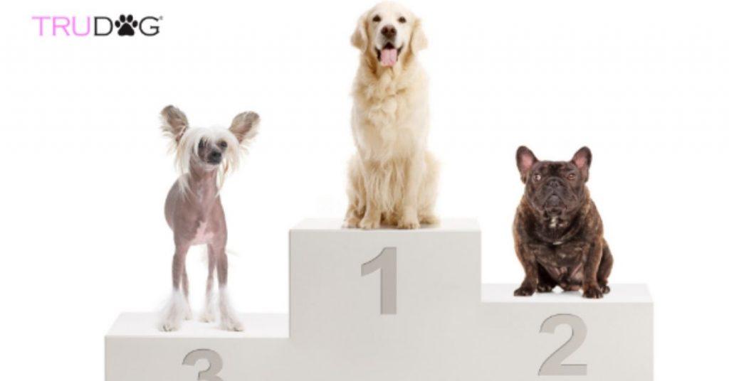 healthiest breeds, dog breeds