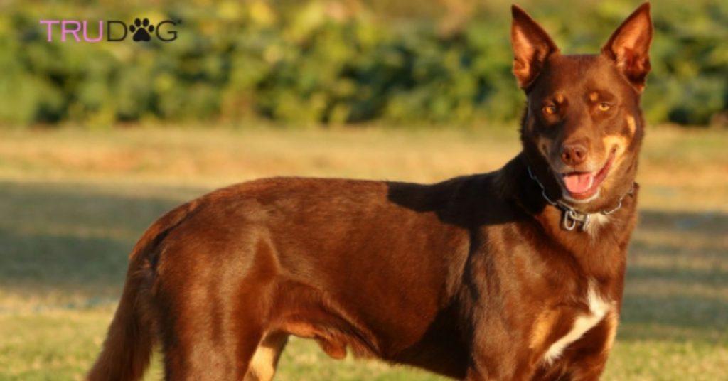 Maggie, Oldest Living Dog