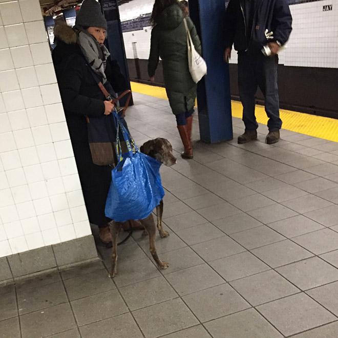 NYC Subway Dog